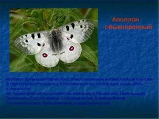 Аполлон обыкновенный Населяет преимущественно биотопы с песчаным и известков