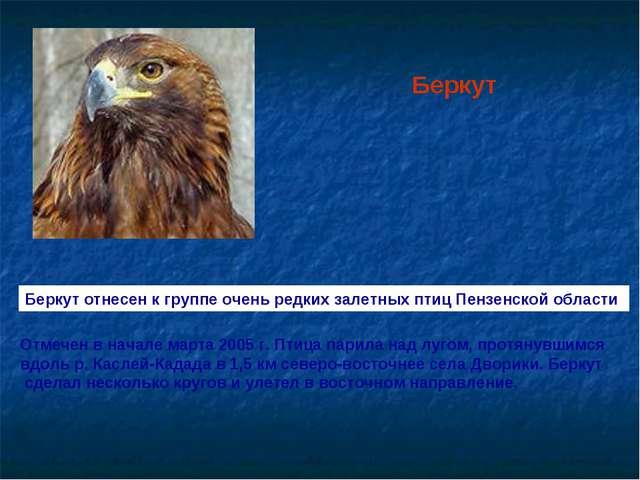Беркут Беркут отнесен к группе очень редких залетных птицПензенской области...
