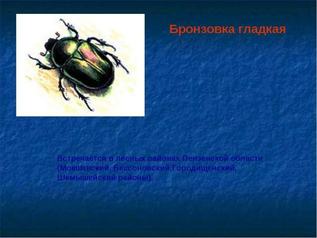 Бронзовка гладкая Встречается в лесных районах Пензенской области (Мокшанский...