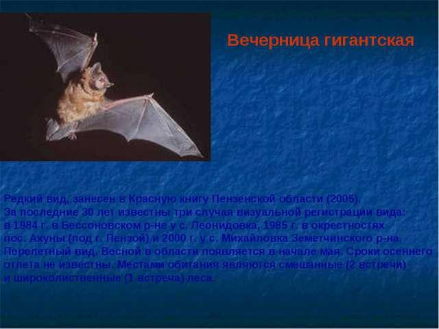 Вечерница гигантская Редкий вид, занесен в Красную книгу Пензенской области (...