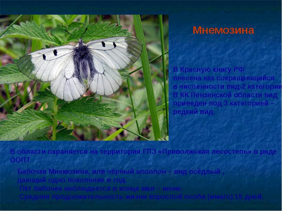 Мнемозина Бабочка Мнемозина,или чёрный аполлон – видосёдлый , дающий одно п...