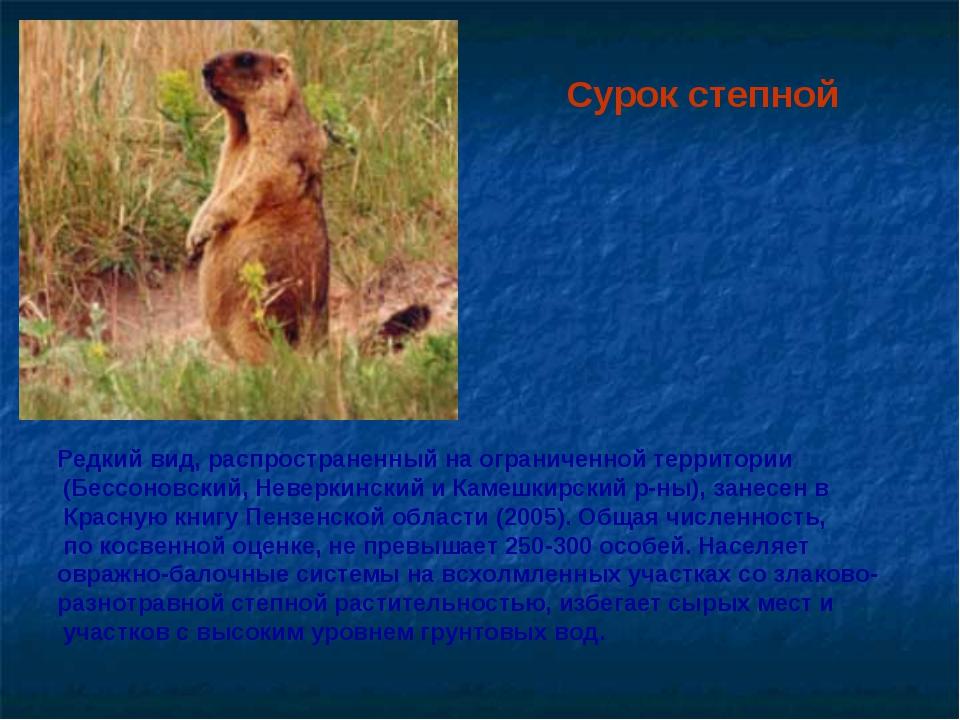 Сурок степной Редкий вид, распространенный на ограниченной территории (Бессон...