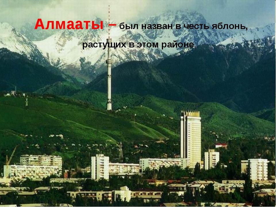 Астана – «Столица» Алмааты – был назван в честь яблонь, растущих в этом районе.