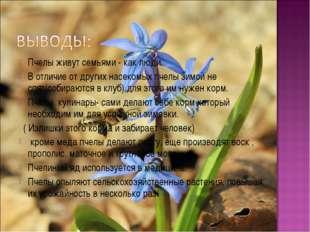 Пчелы живут семьями - как люди. В отличие от других насекомых пчелы зимой не