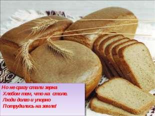 Но не сразу стали зерна Хлебом тем, что на столе. Люди долго и упорно Потру