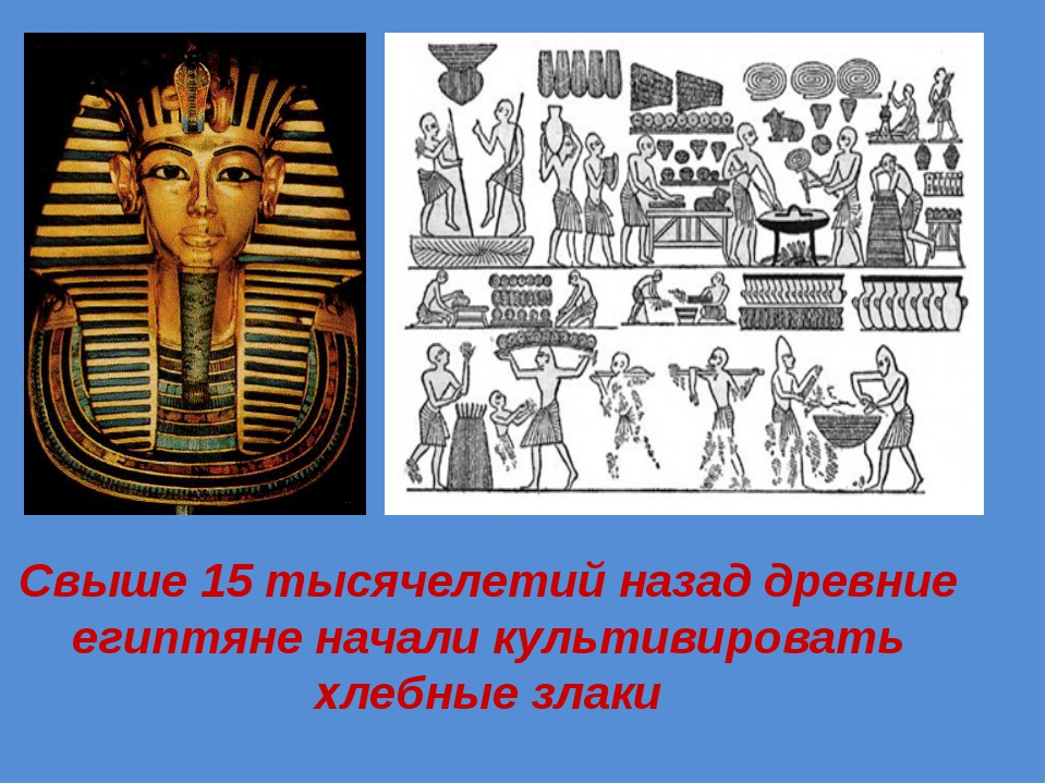 Свыше 15 тысячелетий назад древние египтяне начали культивировать хлебные злаки