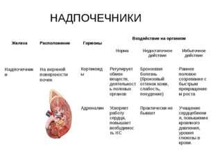 НАДПОЧЕЧНИКИ Железа Расположение Гормоны Воздействие на организм Норма Недост