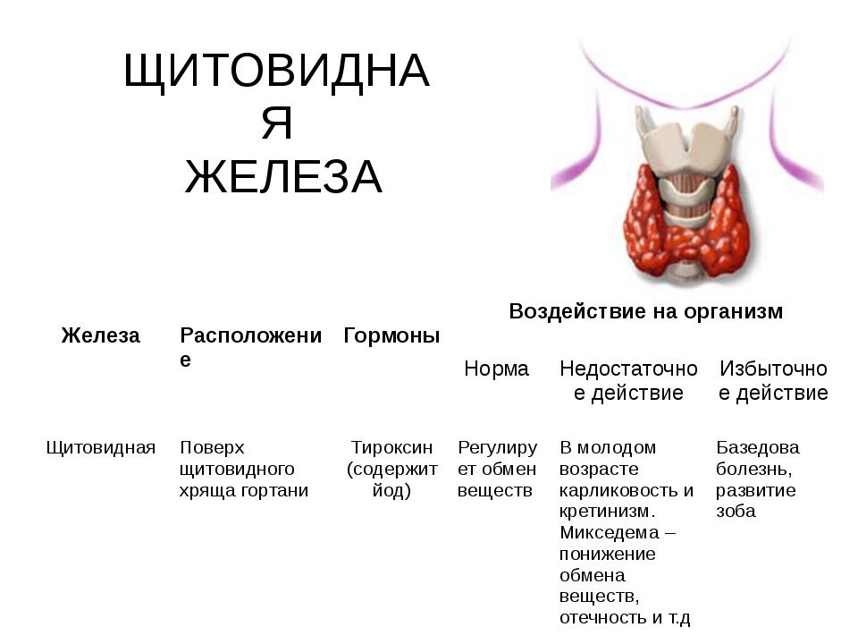 ЩИТОВИДНАЯ ЖЕЛЕЗА Железа Расположение Гормоны Воздействие на организм Норма Н...
