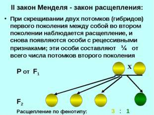 II закон Менделя - закон расщепления: При скрещивании двух потомков (гибридов