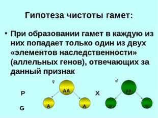 Гипотеза чистоты гамет: При образовании гамет в каждую из них попадает только