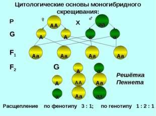 Цитологические основы моногибридного скрещивания: Аа Аа А Аа Аа Аа Аа АА АА А