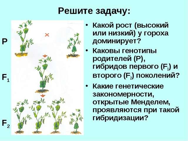 Решите задачу: Какой рост (высокий или низкий) у гороха доминирует? Каковы ге...