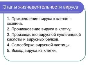 Этапы жизнедеятельности вируса 1. Прикрепление вируса к клетке –хозяина. 2. П