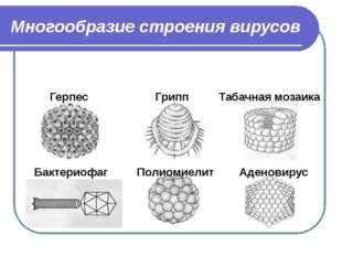 Многообразие строения вирусов Герпес Грипп Табачная мозаика Бактериофаг Полио