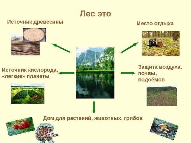 Лес это Источник древесины Место отдыха Дом для растений, животных, грибов За...