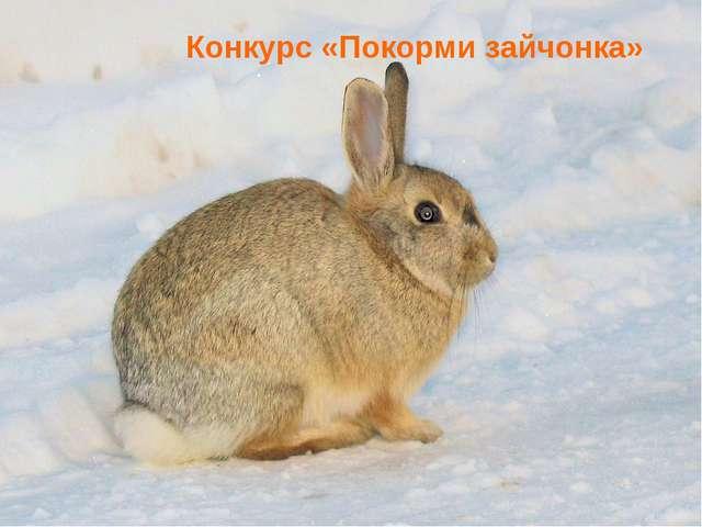 Конкурс «Покорми зайчонка»