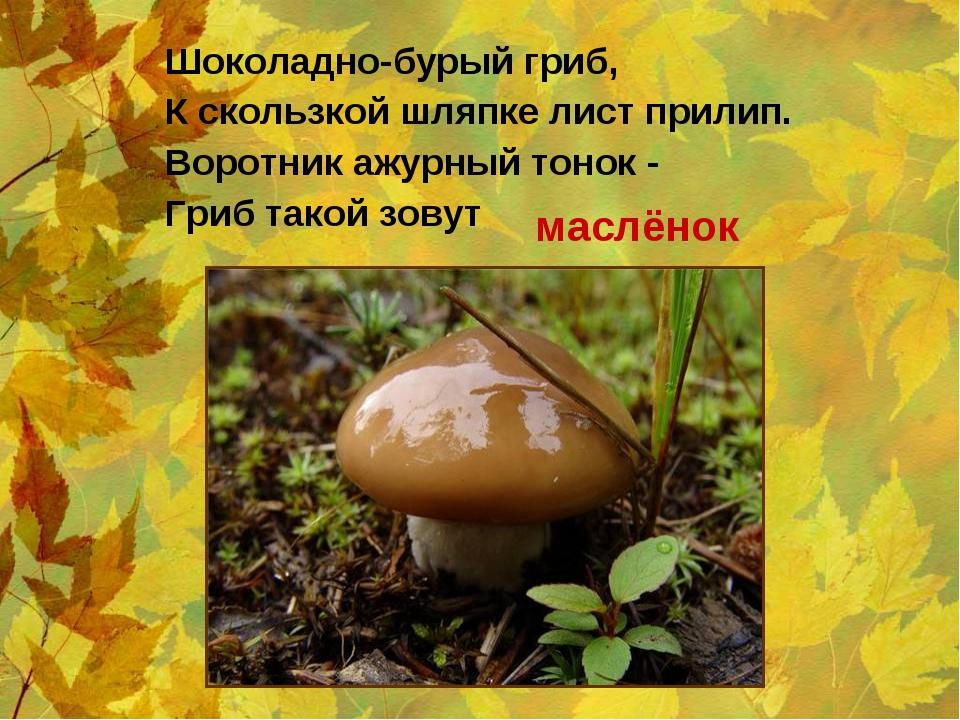 Шоколадно-бурый гриб, К скользкой шляпке лист прилип. Воротник ажурный тонок...