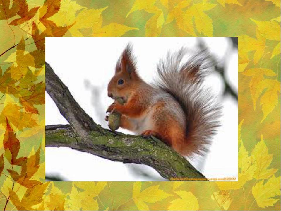 Какой лесной житель сушит себе на деревьях грибы?