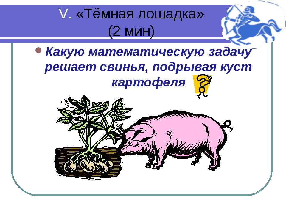 V. «Тёмная лошадка» (2 мин) Какую математическую задачу решает свинья, подрыв...