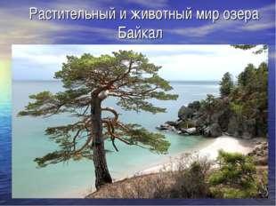 Растительный и животный мир озера Байкал