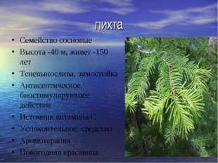 пихта Семейство сосновые Высота -40 м, живет -150 лет Теневынослива, зимостой