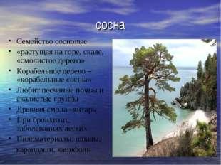 сосна Семейство сосновые «растущая на горе, скале, «смолистое дерево» Корабел