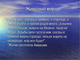 """Животный мир """" Рыбы в ней - осетры и таймени, и стерляди, и омули, и сиги, и"""