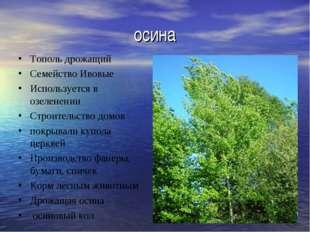 осина Тополь дрожащий Семейство Ивовые Используется в озеленении Строительств