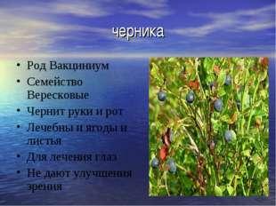 черника Род Вакциниум Семейство Вересковые Чернит руки и рот Лечебны и ягоды