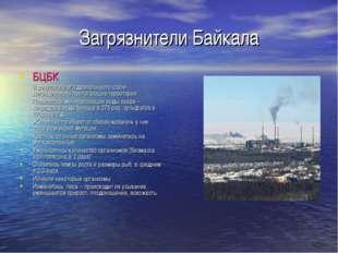 Загрязнители Байкала БЦБК В результате его деятельности стали деградировать п