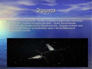 Эпишура Играет исключительную роль . Являясь основным потребителем планктонны