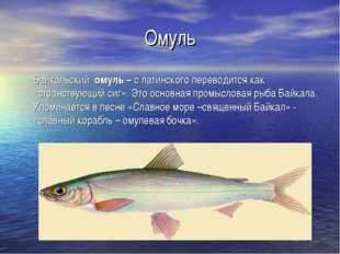 Омуль Байкальский омуль – с латинского переводится как «странствующий сиг». Э