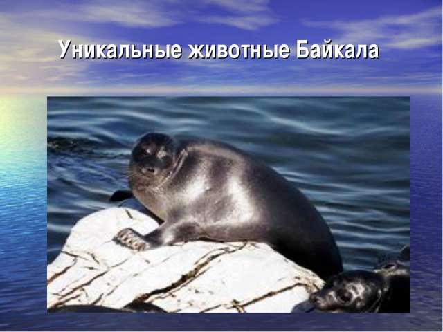 Уникальные животные Байкала