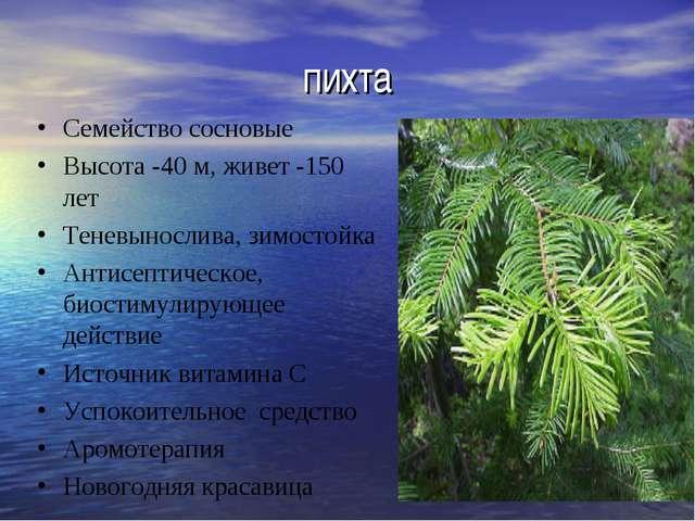 пихта Семейство сосновые Высота -40 м, живет -150 лет Теневынослива, зимостой...