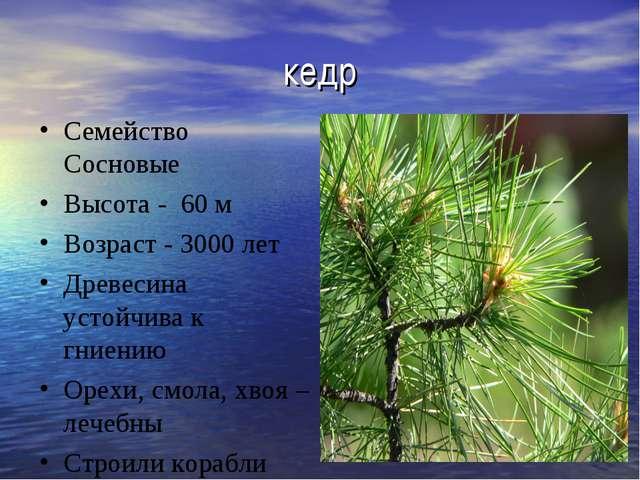 кедр Семейство Сосновые Высота - 60 м Возраст - 3000 лет Древесина устойчива...