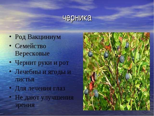 черника Род Вакциниум Семейство Вересковые Чернит руки и рот Лечебны и ягоды...
