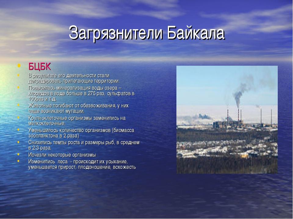 Загрязнители Байкала БЦБК В результате его деятельности стали деградировать п...