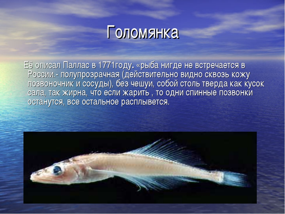 Голомянка Её описал Паллас в 1771году. «рыба нигде не встречается в России.-...