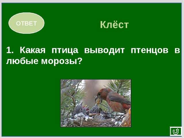 1. Какая птица выводит птенцов в любые морозы? ОТВЕТ Клёст