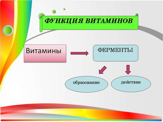 ФЕРМЕНТЫ образование действие ФУНКЦИЯ ВИТАМИНОВ