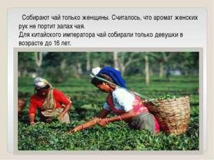 Собирают чай только женщины. Считалось, что аромат женских рук не портит зап