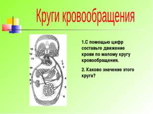 1.С помощью цифр составьте движение крови по малому кругу кровообращения. 2.