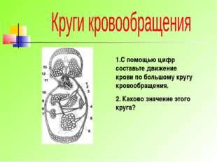 1.С помощью цифр составьте движение крови по большому кругу кровообращения. 2