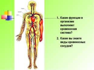Какие функции в организме выполняет кровеносная система? Какие вы знаете виды