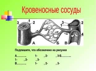Подпишите, что обозначено на рисунке А……….. 1- , 2- , 3-Б……….. 1- , 2- , 3-