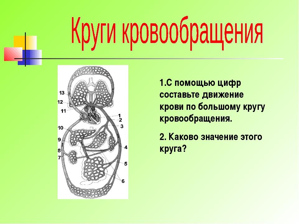 1.С помощью цифр составьте движение крови по большому кругу кровообращения. 2...
