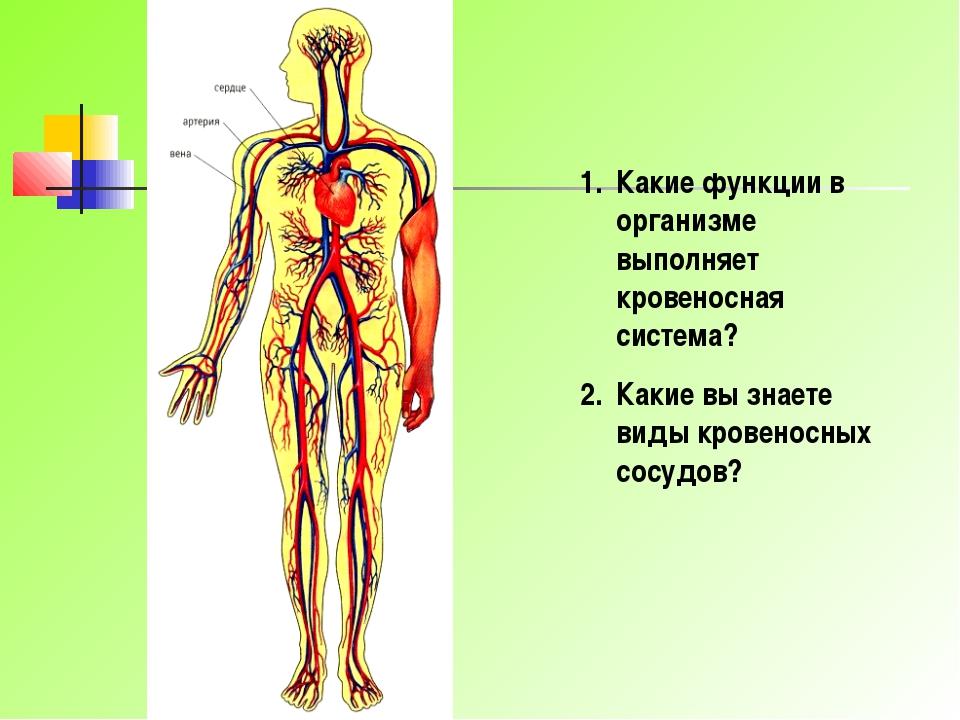 Какие функции в организме выполняет кровеносная система? Какие вы знаете виды...