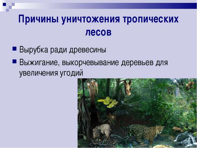 Причины уничтожения тропических лесов Вырубка ради древесины Выжигание, выкор...
