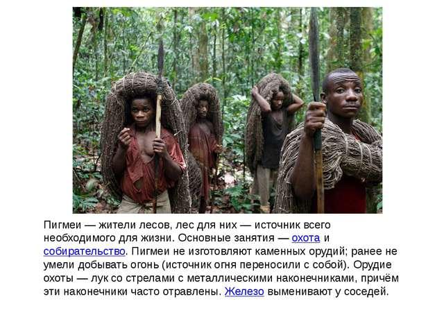 Пигмеи — жители лесов, лес для них — источник всего необходимого для жизни. О...