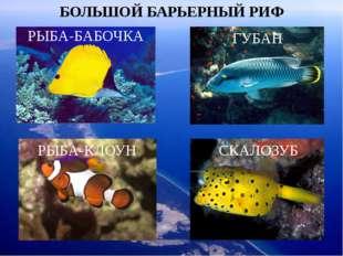 БОЛЬШОЙ БАРЬЕРНЫЙ РИФ РЫБА-БАБОЧКА ГУБАН РЫБА-КЛОУН СКАЛОЗУБ